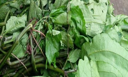 Ugwu farming