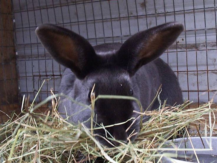 Starting A Rabbit Farm Sample Business Plan Template - Farming business plan template
